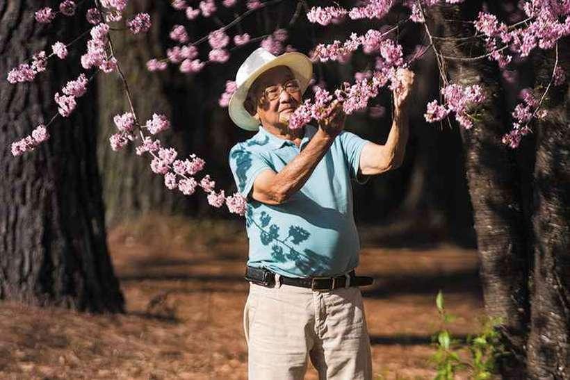 Filho de imigrantes japoneses, aos 91 anos Haruji Miura considera que sua família foi muito feliz no Brasil. Em 1913, seus pais desembarcaram do navio